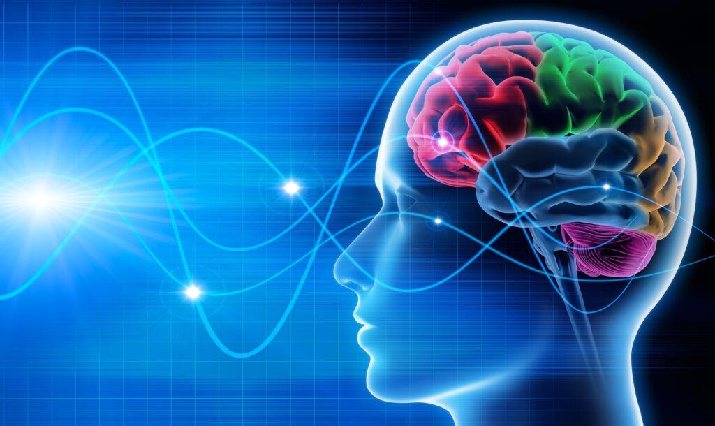 Wat is neuroplasticiteit?