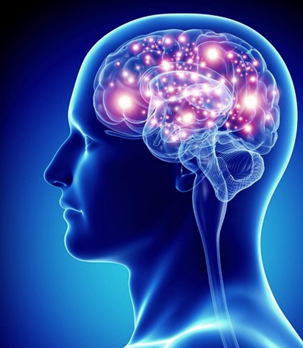 Wat is neuroplasticiteit